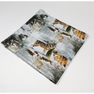 Hundid lumises metsas meriinovoodriga torusall